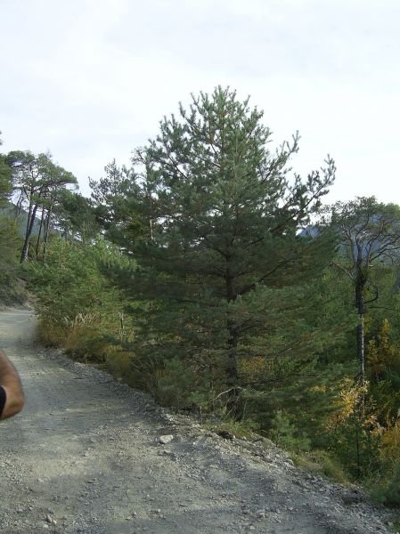 Port de pins classique stagesvtdanslesalpes0651